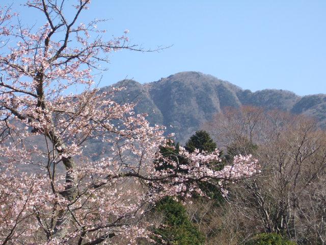 箱根・金時山の花 Vol.50   _e0024094_17411493.jpg
