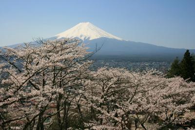 忠霊塔の桜_c0193896_21314157.jpg