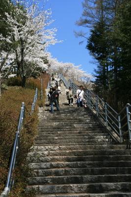 忠霊塔の桜_c0193896_2141121.jpg