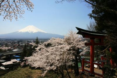 忠霊塔の桜_c0193896_214148.jpg
