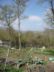 春の田舎は大忙し~4月の畑_f0106597_18404531.jpg