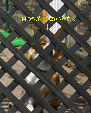 c0127703_22553154.jpg