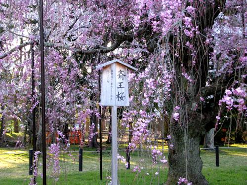 世界遺産 上賀茂神社_e0048413_20544526.jpg
