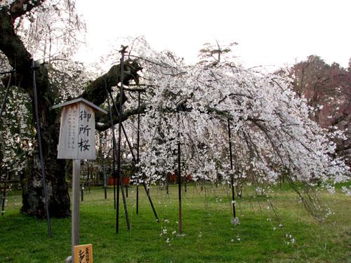 世界遺産 上賀茂神社_e0048413_2054852.jpg