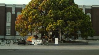 京都大学に「くびくびカフェ」_e0094315_2224198.jpg