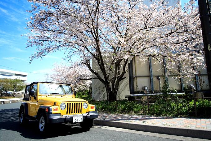 「桜」の季節はあっという間に過ぎまして…_f0105425_1525524.jpg
