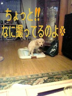 f0148927_1050163.jpg