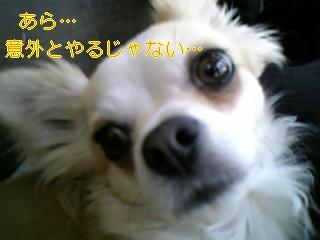 f0148927_1056849.jpg
