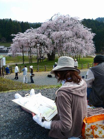 樹齢400年、畑の枝垂れ桜 よもぎ餅  (滋賀県甲賀市信楽町)_d0108737_2273451.jpg