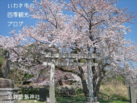 f0105342_11304441.jpg