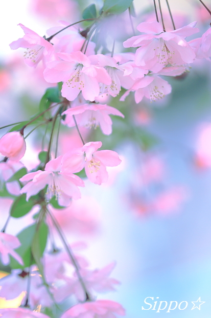 ■■flower curtain■■_c0195662_18112420.jpg