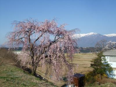 桜・さくら・サクラ_b0117564_222454100.jpg