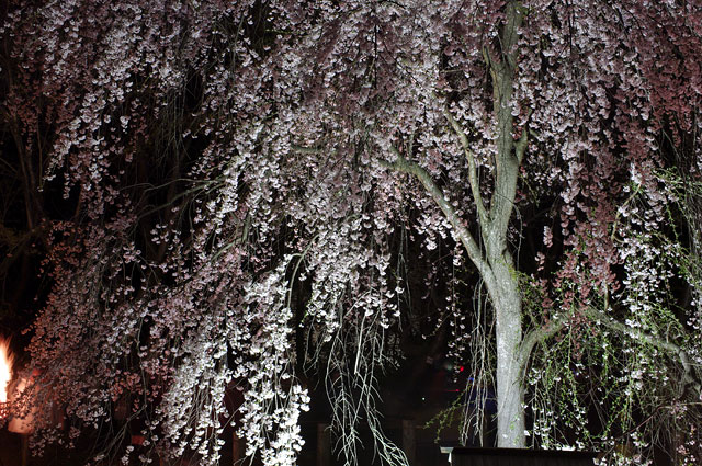 2009 SAKURA 日記 ◆4月10日◆_e0082981_10215797.jpg