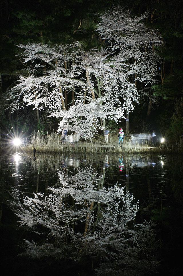 2009 SAKURA 日記 ◆4月10日◆_e0082981_1022218.jpg