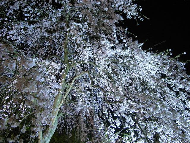 2009 SAKURA 日記 ◆4月10日◆_e0082981_1022477.jpg