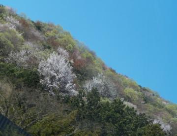 山形赤湯老舗旅館桜湯山須臾_c0180686_23103100.jpg