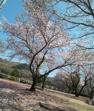 山形赤湯老舗旅館桜湯山須臾_c0180686_2313135.jpg