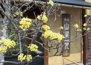 山形赤湯老舗旅館桜湯山須臾_c0180686_2365327.jpg