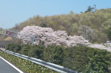 山形赤湯老舗旅館桜湯山須臾_c0180686_2382562.jpg