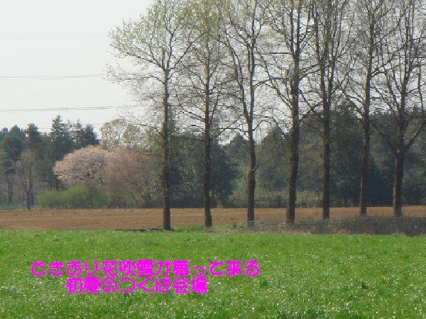 b0101991_6255234.jpg