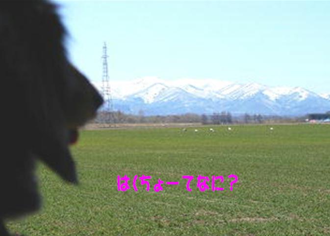 f0195891_19433597.jpg