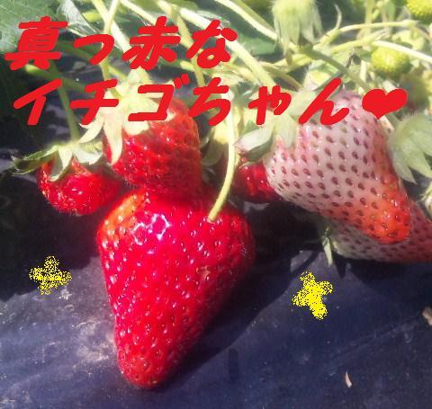 f0180994_1452164.jpg