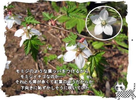 f0137096_017686.jpg