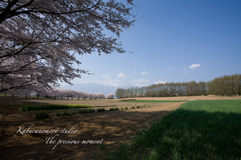 09/4/13  桜、桜で桜かな 楽しみました!_c0137403_18585450.jpg