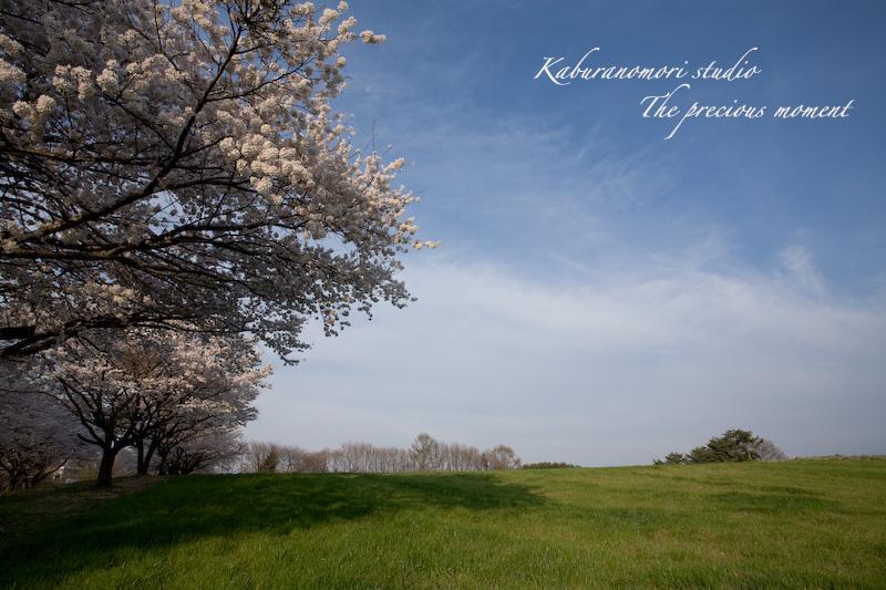 09/4/13  桜、桜で桜かな 楽しみました!_c0137403_185925100.jpg