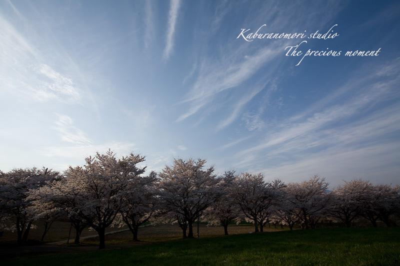 09/4/13  桜、桜で桜かな 楽しみました!_c0137403_18595285.jpg