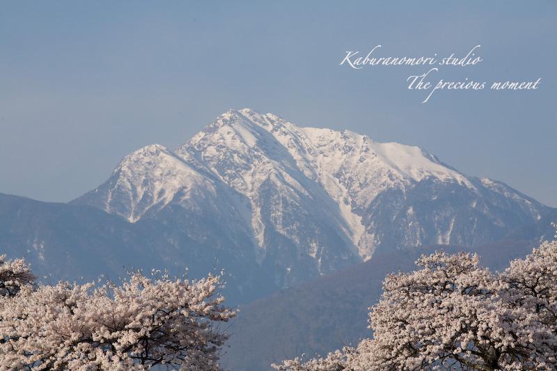 09/4/13  桜、桜で桜かな 楽しみました!_c0137403_1903127.jpg