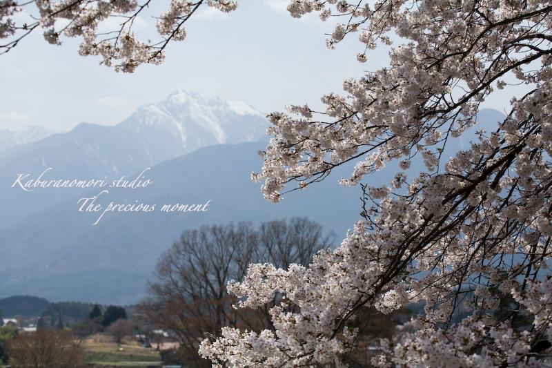 09/4/13  桜、桜で桜かな 楽しみました!_c0137403_1935150.jpg