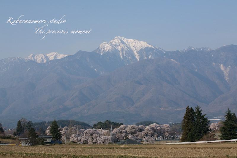 09/4/13  桜、桜で桜かな 楽しみました!_c0137403_1941372.jpg