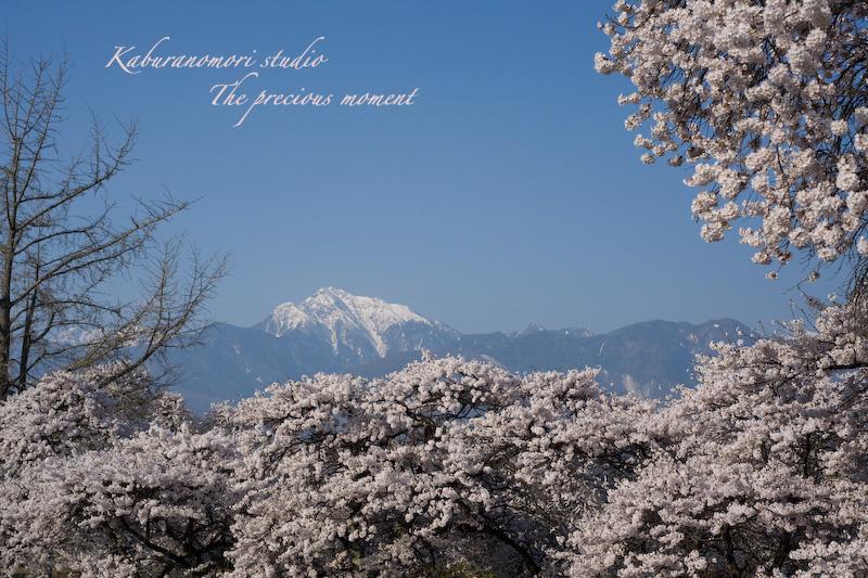 09/4/13  桜、桜で桜かな 楽しみました!_c0137403_1953259.jpg
