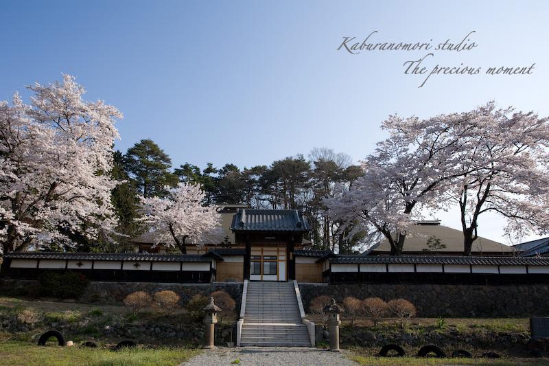 09/4/13  桜、桜で桜かな 楽しみました!_c0137403_196438.jpg