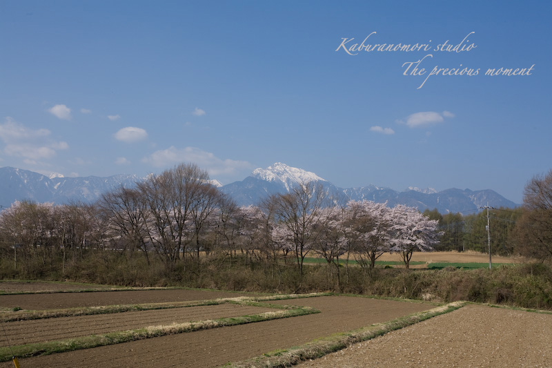 09/4/13  桜、桜で桜かな 楽しみました!_c0137403_1975084.jpg