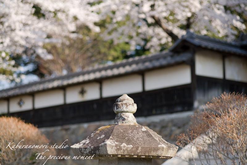 09/4/13  桜、桜で桜かな 楽しみました!_c0137403_1981294.jpg