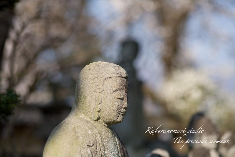 09/4/13  桜、桜で桜かな 楽しみました!_c0137403_1985252.jpg