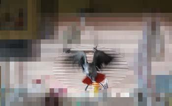c0133013_16245156.jpg