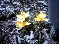 春ですね_f0146620_16561783.jpg