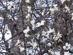 春ですね_f0146620_17272185.jpg