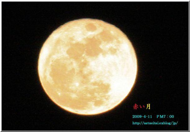 ヒヨドリ:箱根湿生花園 NOⅣ_d0123528_15134788.jpg
