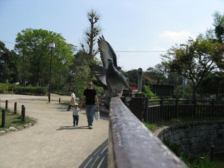 碑文谷公園_d0045432_1611059.jpg