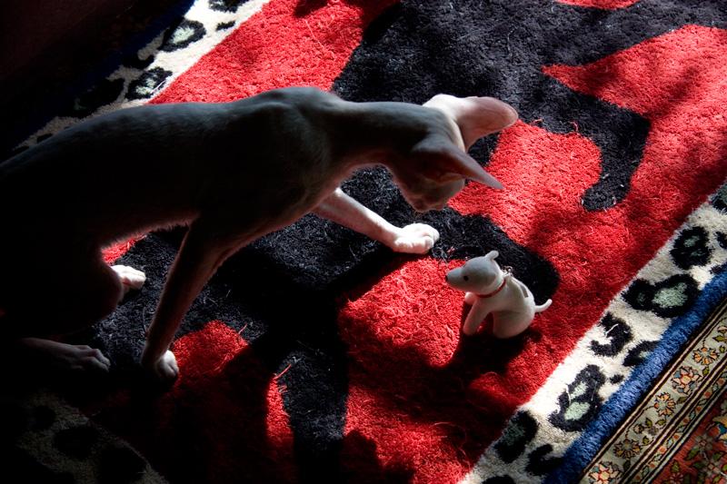 ジャガモコ vs お父さん犬_e0048332_418651.jpg