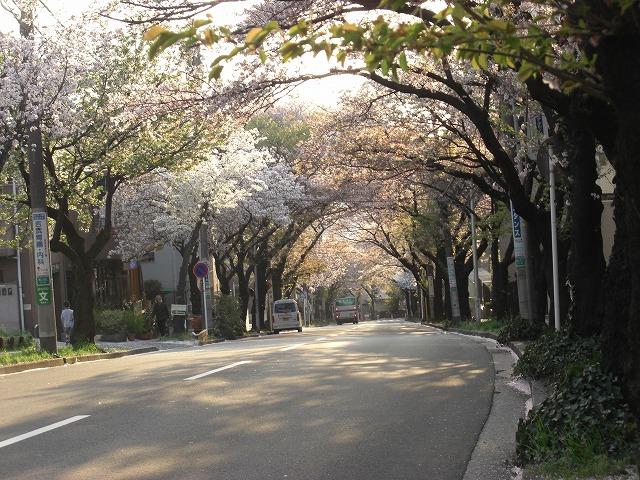 先週で桜も終わった・・・。_e0054438_18481657.jpg