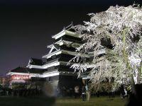 松本城夜桜会_c0094442_1449289.jpg