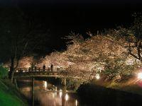 松本城夜桜会_c0094442_1450077.jpg