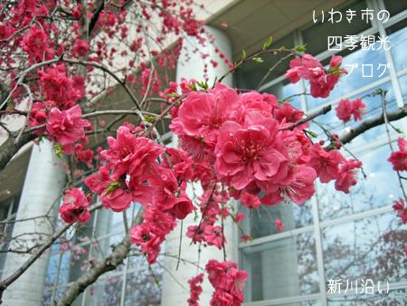 f0105342_12591976.jpg