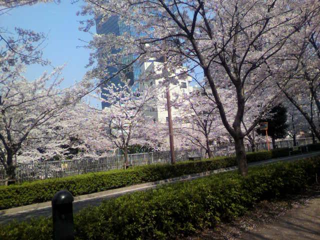 桜~(^-^)b_e0157359_16513697.jpg