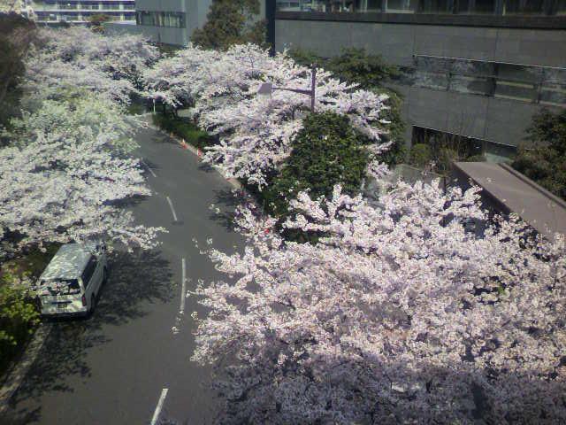 桜~(^-^)b_e0157359_16515367.jpg